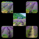 Collage of lavender in front of the abbaye de Senanque in Provence Royalty Free Stock Images
