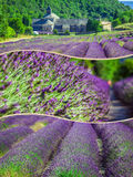 Collage of lavender in front of the abbaye de Senanque in Provence Stock Image