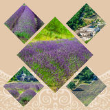 Collage of lavender in front of the abbaye de Senanque in Provence.  Stock Photography