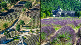 Collage of lavender in front of the abbaye de Senanque in Provence.  Royalty Free Stock Photography