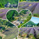 Collage of lavender in front of the abbaye de Senanque in Provence Stock Photos
