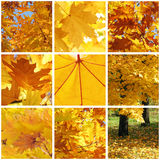 Autumnal collage. Collage with leaves at fall Stock Images