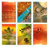 Collage of leaves and snail shells Royalty Free Stock Photo