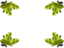 Collage of leaves of trees on a white background. royalty free illustration