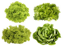 Collage of lettuce. Fresh green lettuce isolated on white background Royalty Free Stock Image