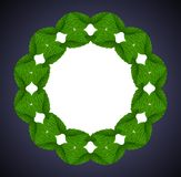 Collage of light green leaves of a raspberry in the shape of wreath on dark blue background. stock photos