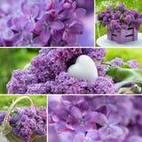 Collage lilas Photo libre de droits