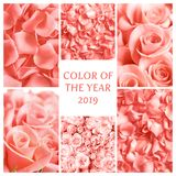 Collage with living coral color. And beautiful rose flowers royalty free stock photos
