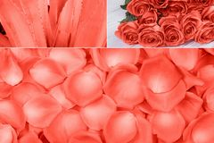 Collage in Living Coral color.Color of the year 2019. Collage in Living Coral color romantic theme. Color of the year 2019. Trendy concept royalty free stock photo