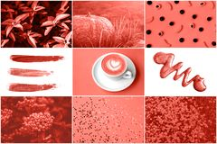 Collage in Living Coral color. Trendy color concepf of the year. stock image