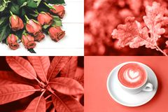 Collage in Living Coral color. Trendy color concept of the year. stock image