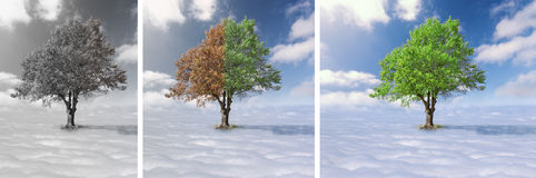 Collage - Lone tree above the clouds Stock Images