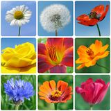 Flowers. Collage with macro photos of flowers Stock Photo