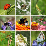 Insects. Collage with macro photos of insects Royalty Free Stock Photos