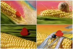 Collage with maize, heart Stock Photography