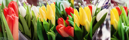 Collage of many bouquets of multi-colored tulips Stock Images