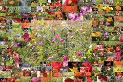 Collage of many flowers Stock Photography