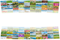 The collage of many nature photos Stock Photos