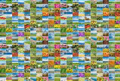 The collage of many nature photos Royalty Free Stock Photography