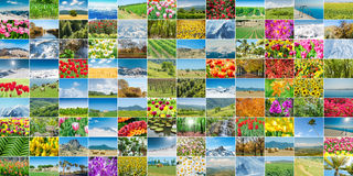 The collage of many nature photos Royalty Free Stock Image