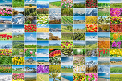 The collage of many nature photos Stock Photography