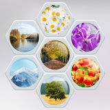 The collage of many nature photos Stock Photo