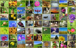 Beautiful  collage of pictures of animals, flowers, landscapes Royalty Free Stock Photos