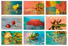 Collage of maple leaf and drops Royalty Free Stock Photos