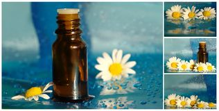 Collage with massage oil, daisy Stock Images