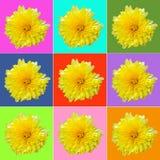 Collage med den gula krysantemumet Royaltyfri Fotografi