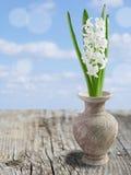 Collage med den härliga vita hyacinten. Fotografering för Bildbyråer