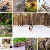Collage med djur Royaltyfri Fotografi