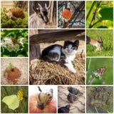 Collage med djur Royaltyfri Bild