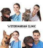 Collage med doktorer och husdjur på vit bakgrund Veterinär- klinik royaltyfri fotografi