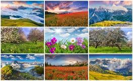 Collage med 9 färgrika sommarlandskap royaltyfria bilder