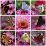 Collage med fjärilar royaltyfria foton
