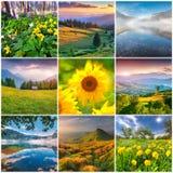Collage med 9 fyrkantiga sommarlandskap royaltyfri bild