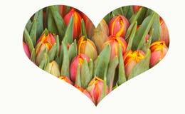 Collage med hjärta som göras av färgrik tulpanvårbakgrund arkivfoton