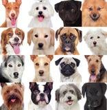 Collage med många hundkapplöpning Arkivbild