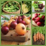 Collage med nya naturliga grönsaker Royaltyfri Bild