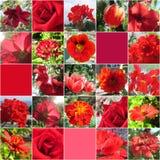 Collage med olika röda blommor samling tecknade blom- handillustrationer Arkivfoto