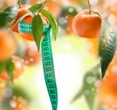 Collage med tangerin. Arkivfoton