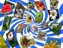Collage med uppsättningen av bilder Arkivfoto