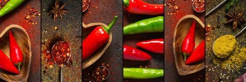 Collage med varm peppar och olika kryddor, banerformat royaltyfria bilder