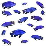 Collage met blauwe vissen Stock Foto's