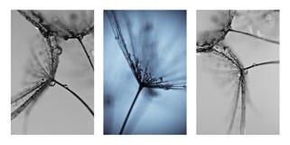 Collage met foto's van paardebloemen. Royalty-vrije Stock Fotografie