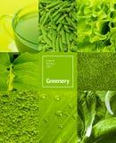 Collage met groene kleur Royalty-vrije Stock Afbeelding