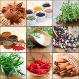 Collage met kruiden Stock Foto