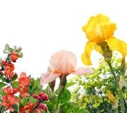 Collage met roze en gele lissen Stock Foto