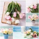 Collage met tulpen een Nd-gele narcissenbloemen Stock Afbeelding